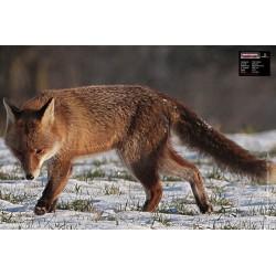 SMALL GAME 40X60 FOX Taikinys